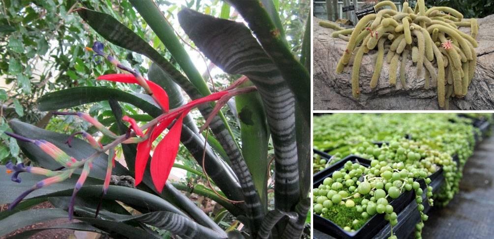 10 Amazing Plants to Plant Indoors